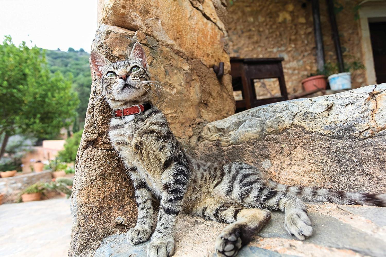 10 X 1//2 Purple for Neck Size: 6.5-8.5 Leather Elastic Stretch Cat//Kitten Collar Alpine