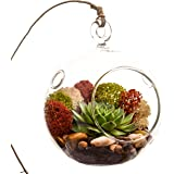 """Bliss Gardens Succulent Terrarium Kit with Moss and River Rocks - 4"""" Round Glass"""
