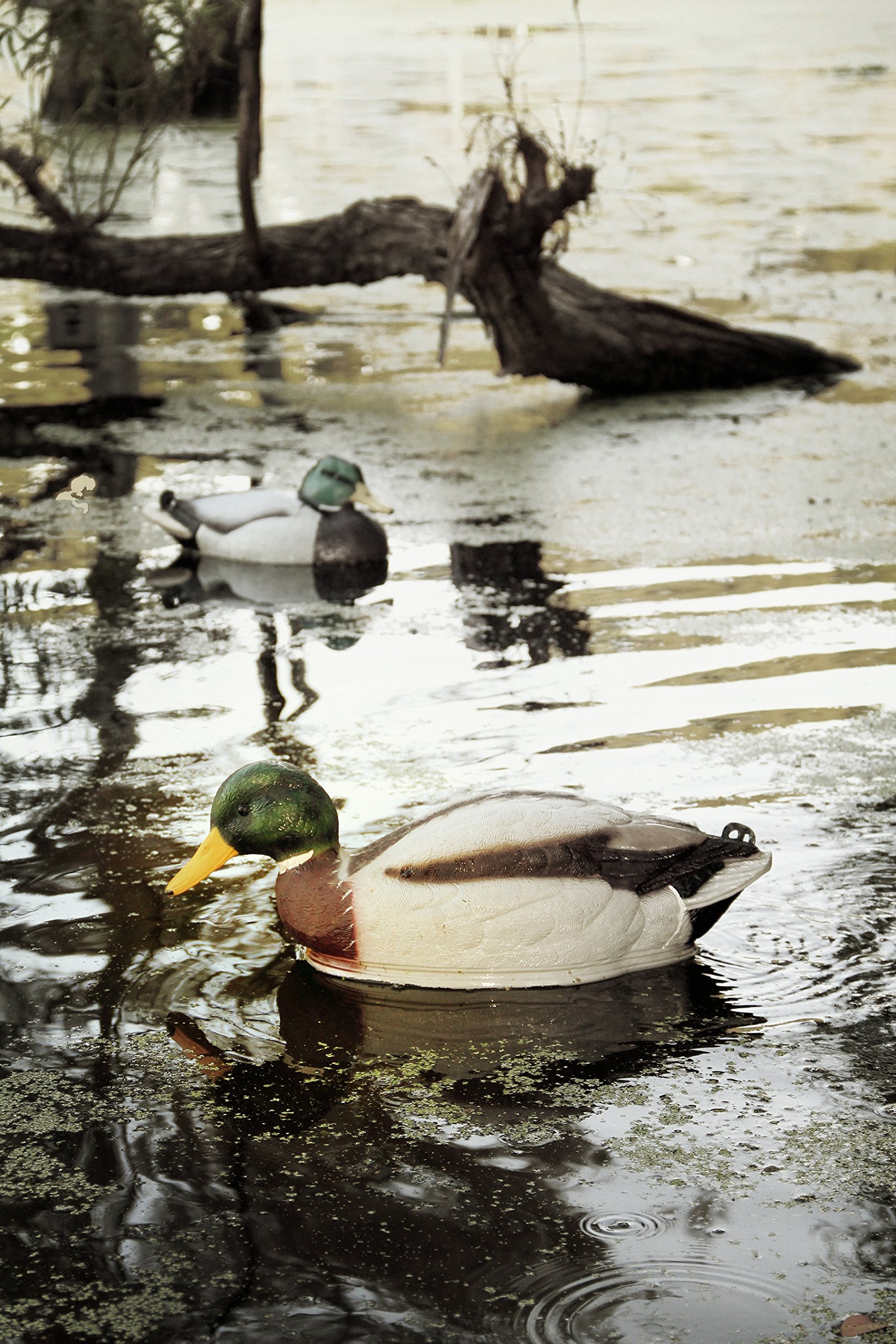 MOJO Outdoors Swimmer Mallard Duck Decoy by MOJO Outdoors (Image #3)