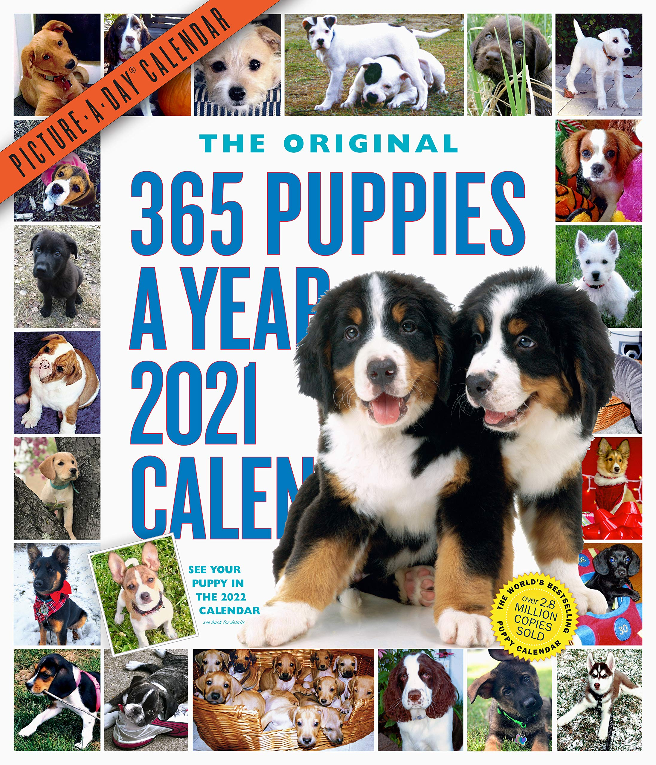 365 Puppies A Year Picture A Day Wall Calendar 2021: Workman