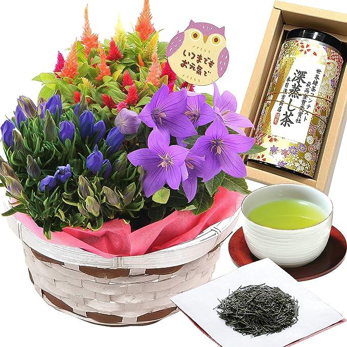 花のギフト社 敬老の日 寄せカゴ 植花 秋のお花 寄せかご 鉢花 敬老の日お茶 お茶ギフト 敬老お茶