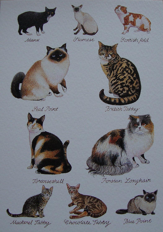 Tabby punto azul siamés manés Escocia punto gatos persas trípticas sello Tarjeta de felicitaciones: Amazon.es: Hogar