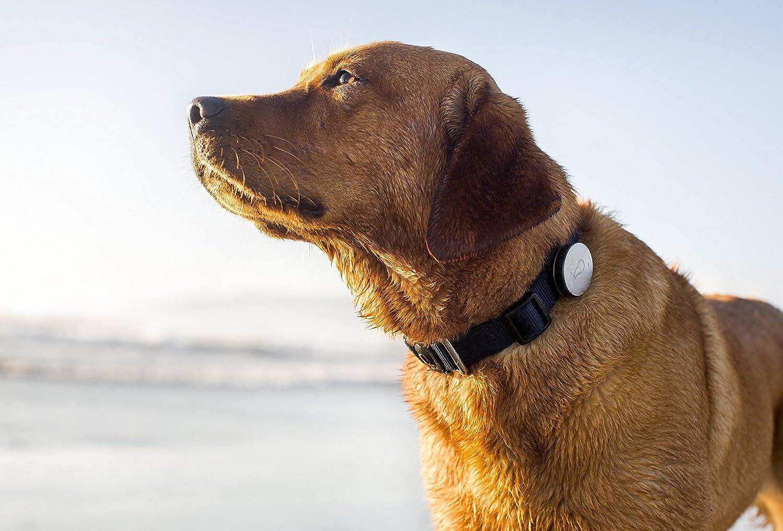 Amazon.com : Whistle Activity Monitor For Dogs : Amazon Launchpad