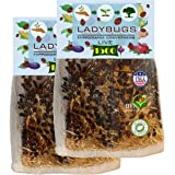 Clark&Co Organic 3000 Live Ladybugs - Good Bugs - (2 X 1500 Live Ladybugs) for Garden - Guaranteed Live Delivery!