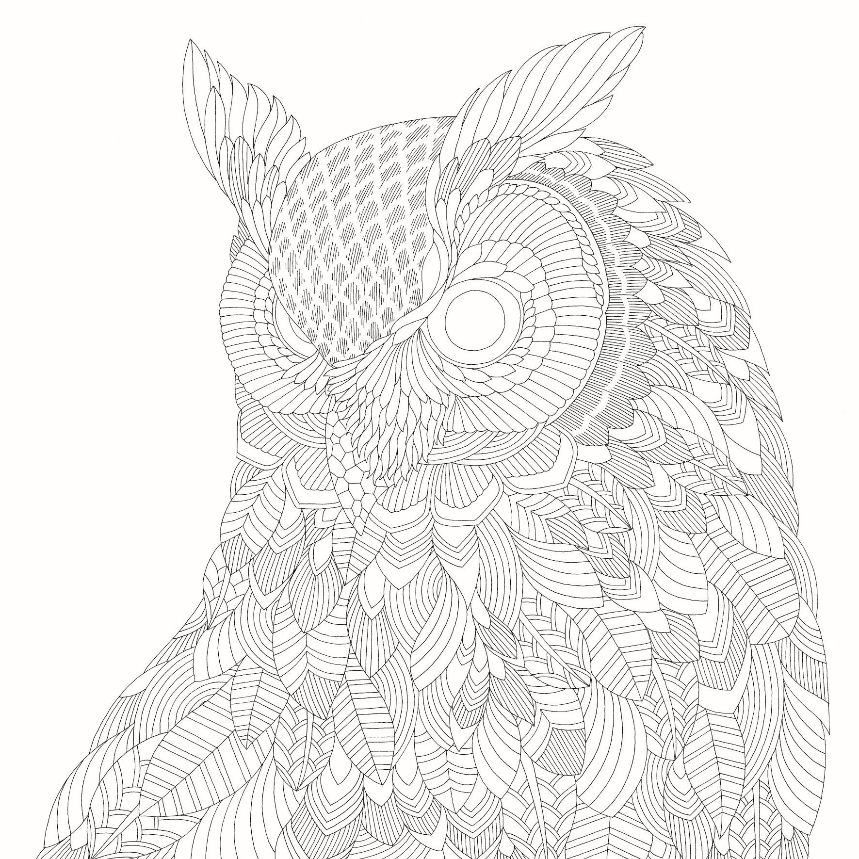 Beautiful Birds And Treetop Treasures Millie Marotta Adult Coloring Book Amazoncouk Books