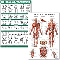 """QuickFit Kettlebell Workouts and Muscular System Anatomy Poster Set - Laminated 2 Chart Set - Kettle Bell Exercise Routine & Muscle Anatomy Diagram - 18"""" x 27"""""""