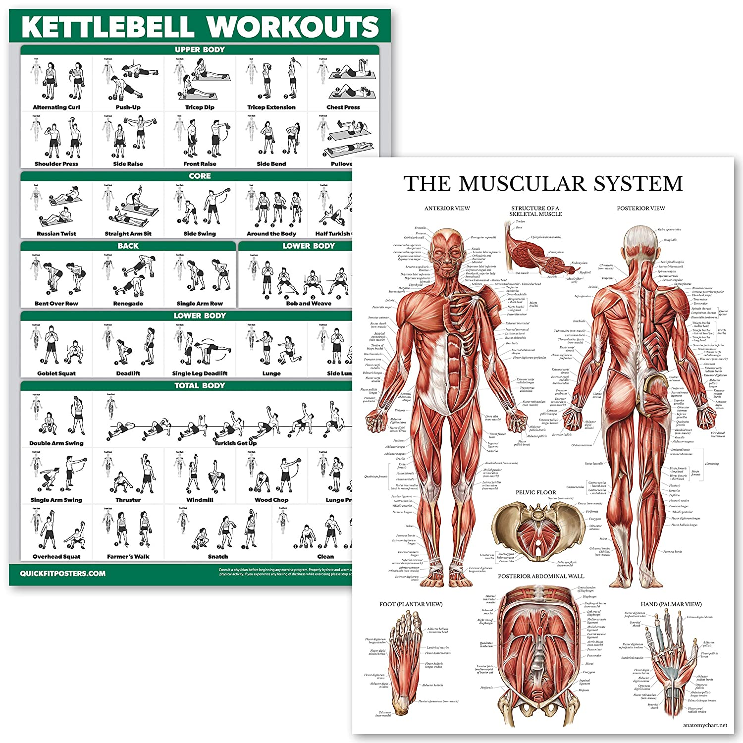 Amazon Quickfit Kettlebell Workouts And Muscular System