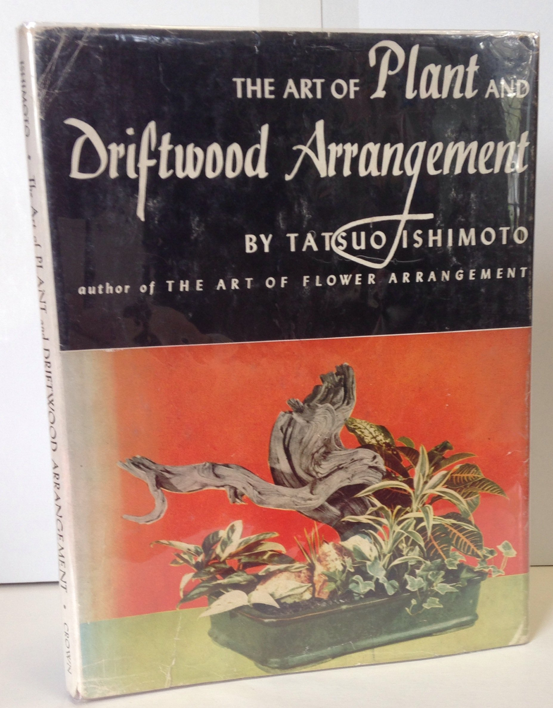 The Art of Plant and Driftwood Arangement