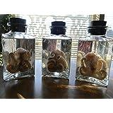 1 Wet Specimen Preserved Octopus Prime specimen in triangle jar Oddities Curiosities