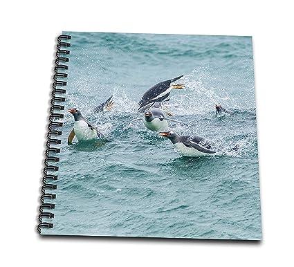 Amazon com: 3dRose Danita Delimont - Penguins - Falkland Islands