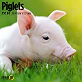 Piglets 2018 16 Month Wall Calendar 12 x 12 inches Bright Day Calendars Publishing