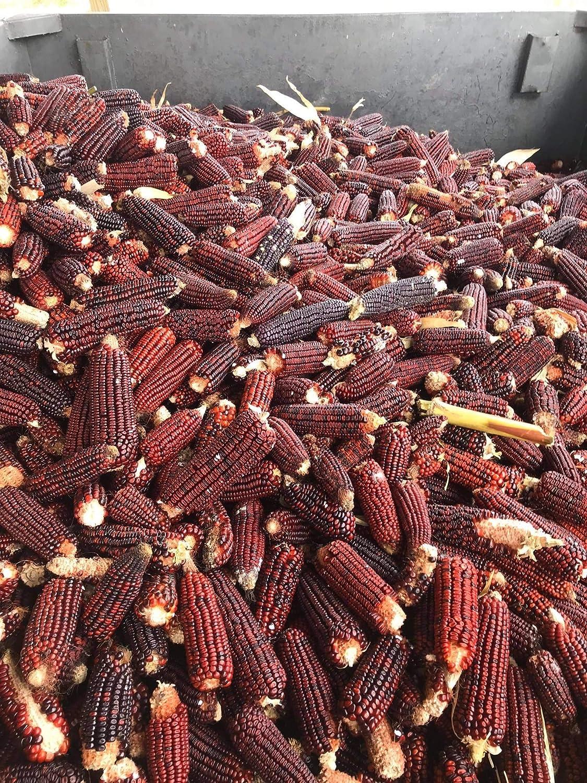 Bloody Butcher Cracked Corn /& Malted Wheat Whiskey Mash /& Fermentation Kit by North Georgia Still Company