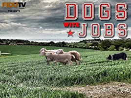 Watch Dogs With Jobs Prime Video