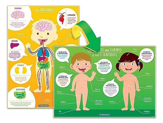 Clementoni - Aprende el Cuerpo Humano (55114.9): Amazon.es: Juguetes y juegos
