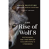 Rise of Wolf 8: Witnessing the Triumph of Yellowstone's Underdog: 1