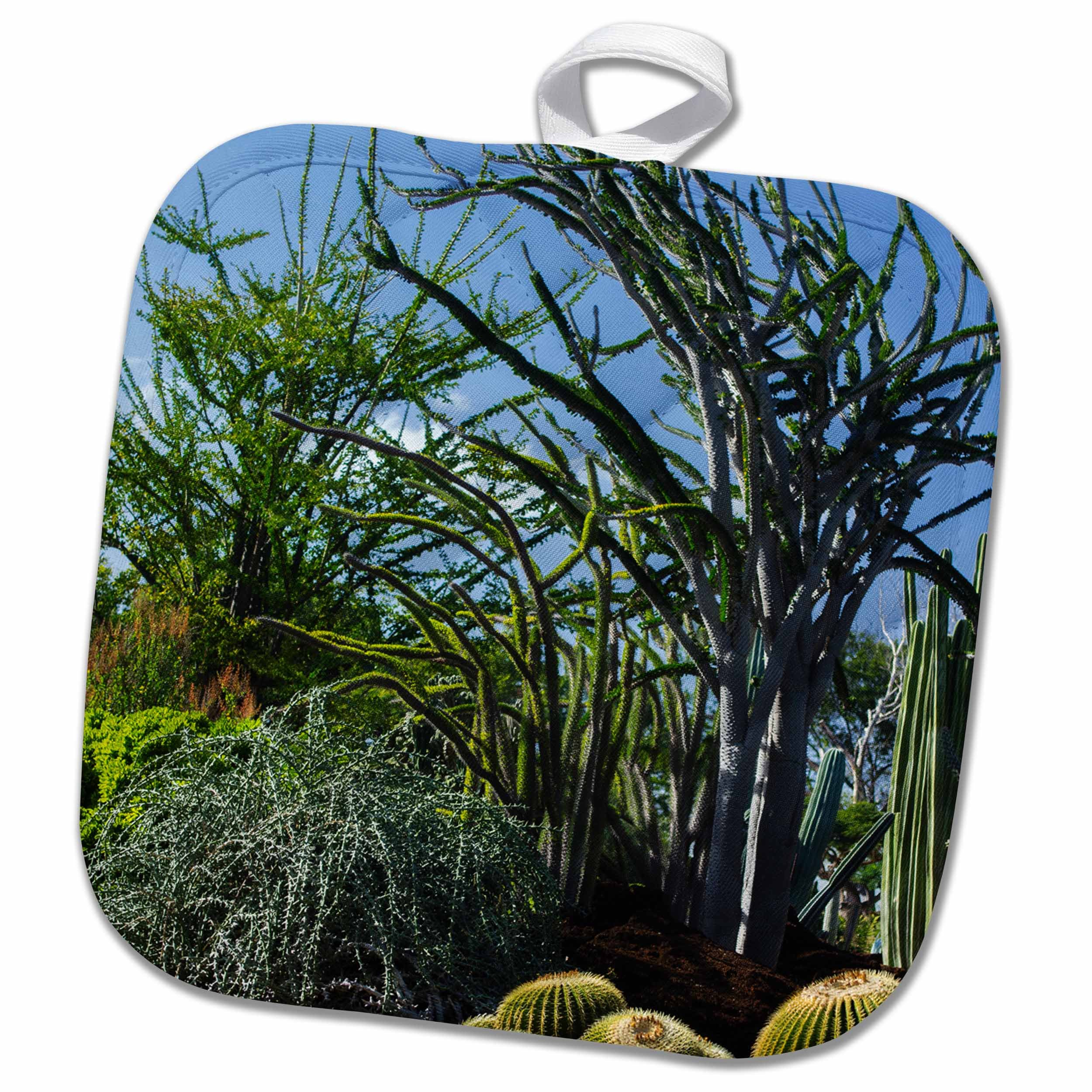 3dRose Danita Delimont - Honolulu - Hawaii, Oahu, Honolulu. Cactus garden at Kapiolani Community College. - 8x8 Potholder (phl_250790_1)