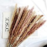 45cm Natural Dried Pampas Grass 30pcs for Flower Arrangements Home Decor (Natural)