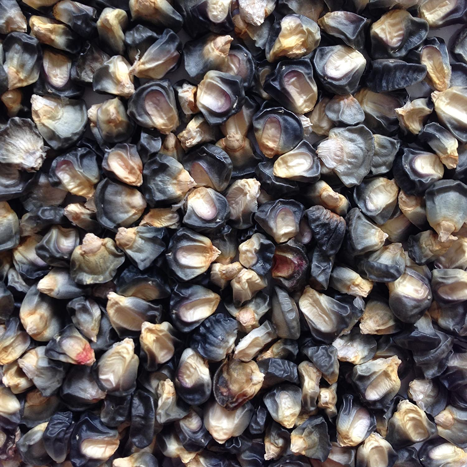 Hopi Blue Corn Grown in the USA, 100 Seeds
