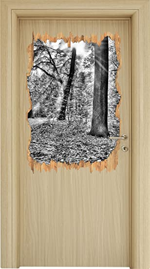 Monocrome Sonnenstrahlen Auf Waldlichtung Holzdurchbruch Im 3d Look