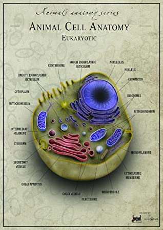 Animal cell Anatomy biology Poster Canvas Art print A4 A3 A2 A1 Best ...