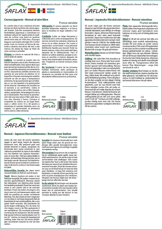 Bonsai 30 Samen Japanische Bl/ütenkirsche Mit Geschenk- // Versandbox Prunus serulata Versandaufkleber Geschenk Set Geschenkkarte und Anzuchtsubstrat SAFLAX