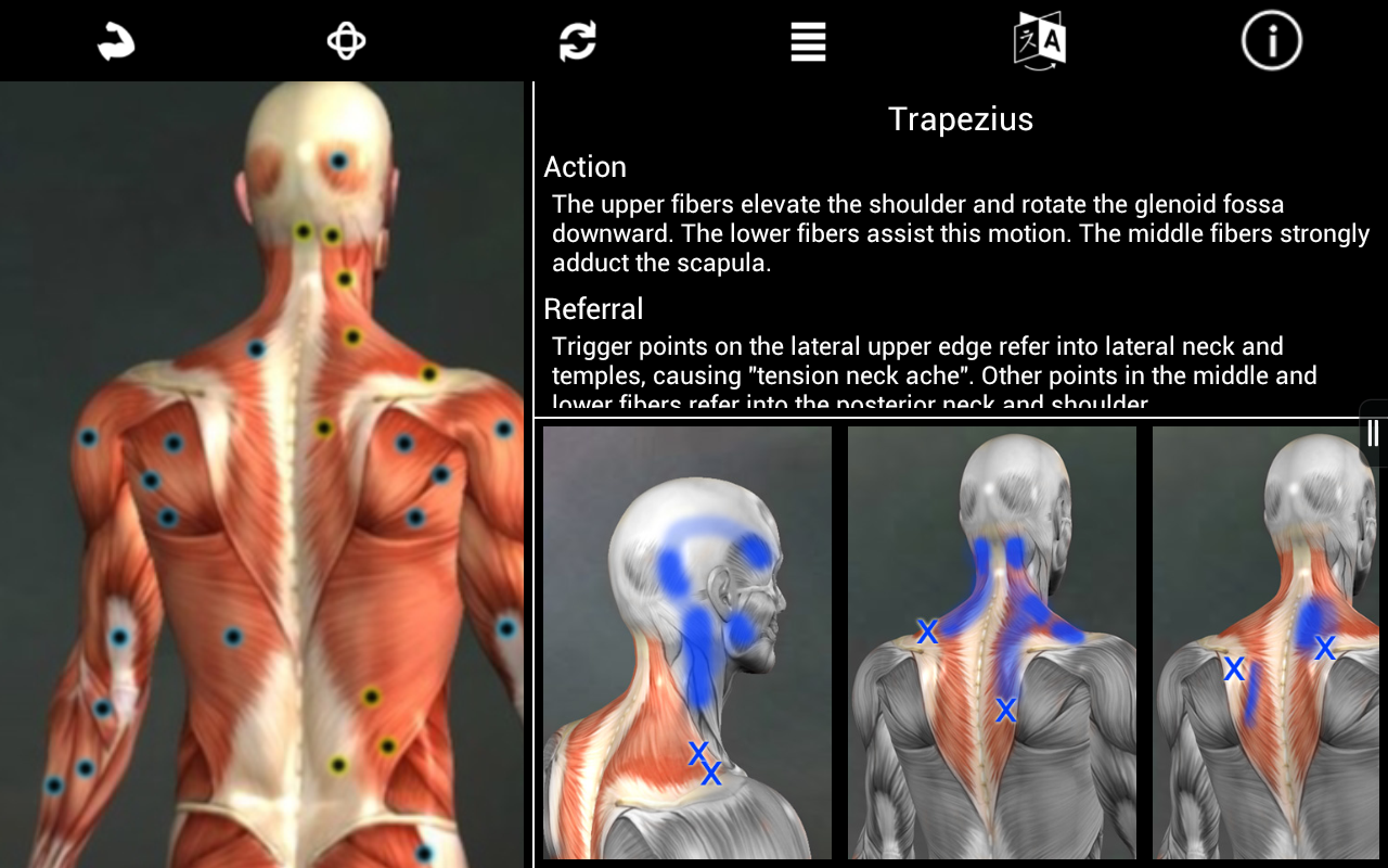 Amazon.com: Muscle Trigger Point Anatomy: Appstore for Android