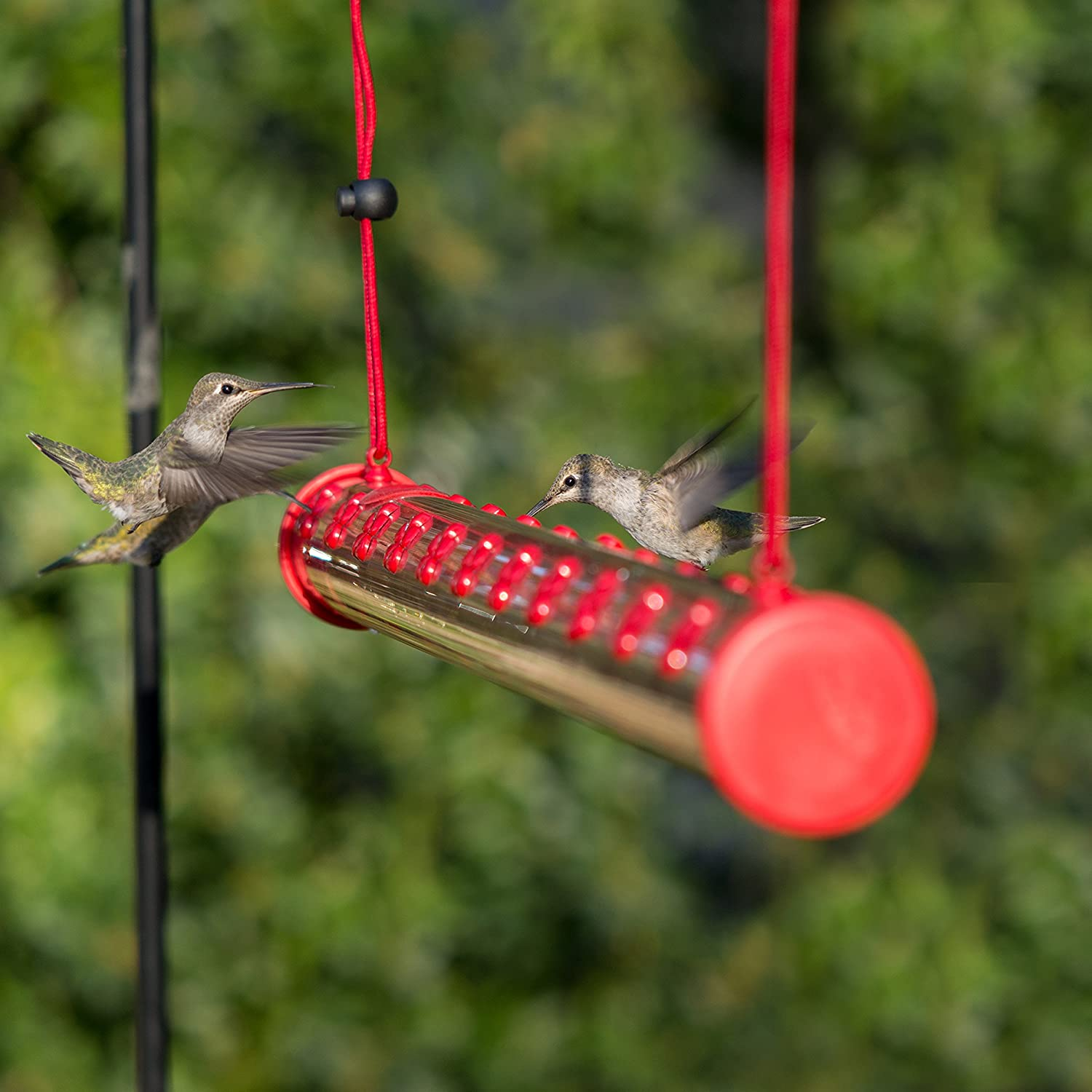 feeder outdoor reviews couronne wayfair humingbird pdx hummingbird