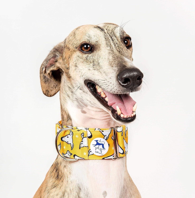 Collar para perros Martingale Caralapiz amarillo - El galgo azul ...