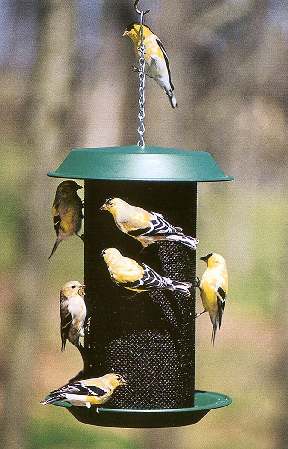 feeder how build to thistle finch id feeders bird a
