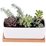 StarPack Premium Small White Ceramic Succulent Planter Pot with Bamboo Base