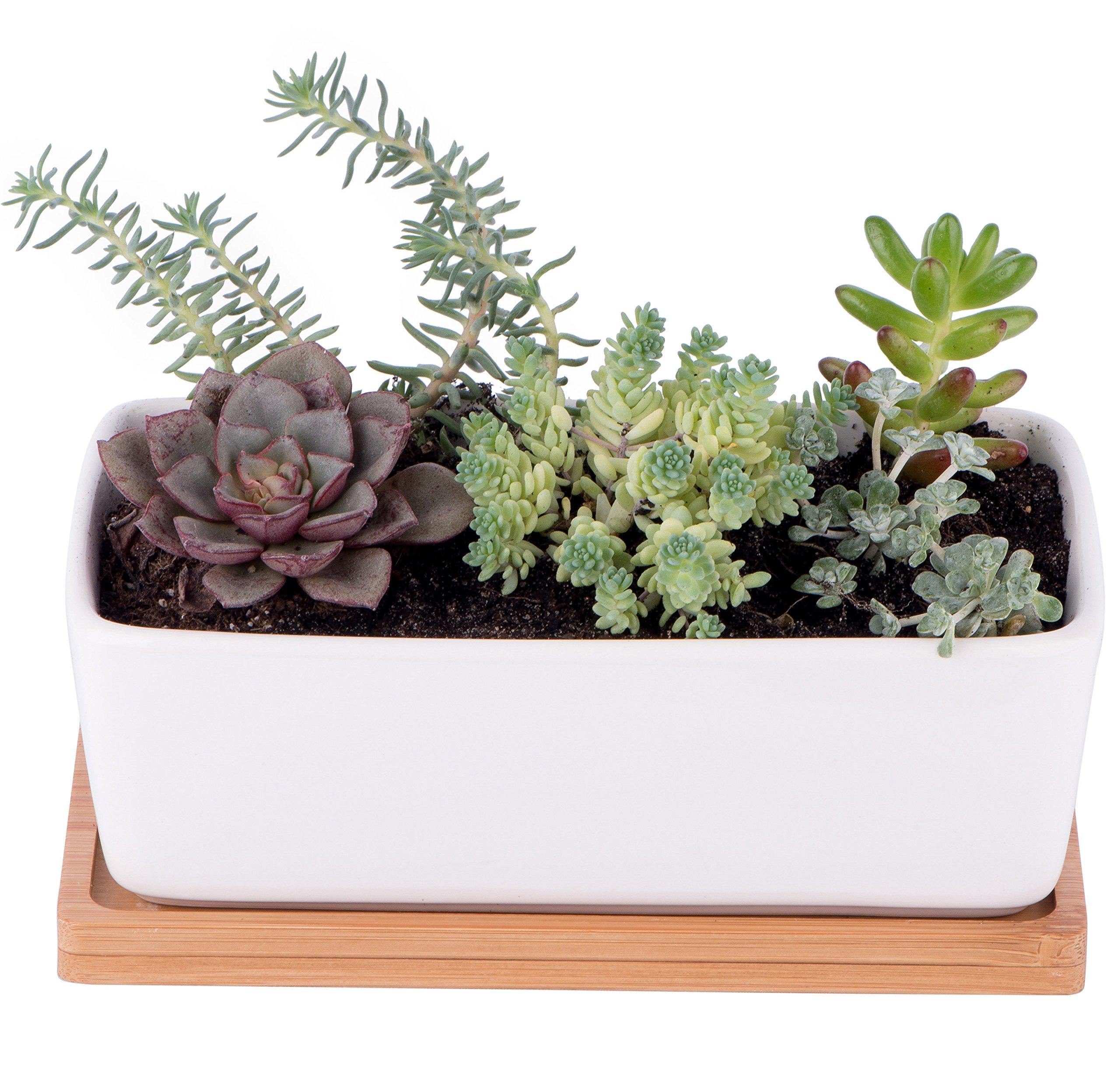StarPack Premium Small White Ceramic Succulent Planter Pot with Bamboo Base