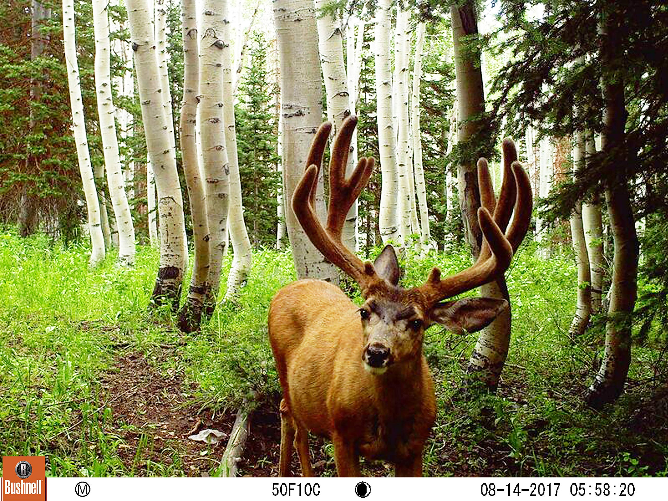 Bushnell 119877 24MP Trophy Cam HD No Glow Trail Camera with Color Viewer, Camo Camouflage by Bushnell (Image #6)