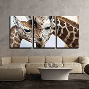 wall26 - 3 Piece Canvas Wall Art - Closeup of a Mother Caring for Young - Modern Home Art Stretched and Framed Ready to Hang - 16