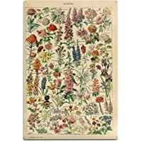 Lantern Press Assorted Flowers - E - Vintage Bookplate - Adolphe Millot Artwork 82076 (6x9 Aluminum Wall Sign, Wall…