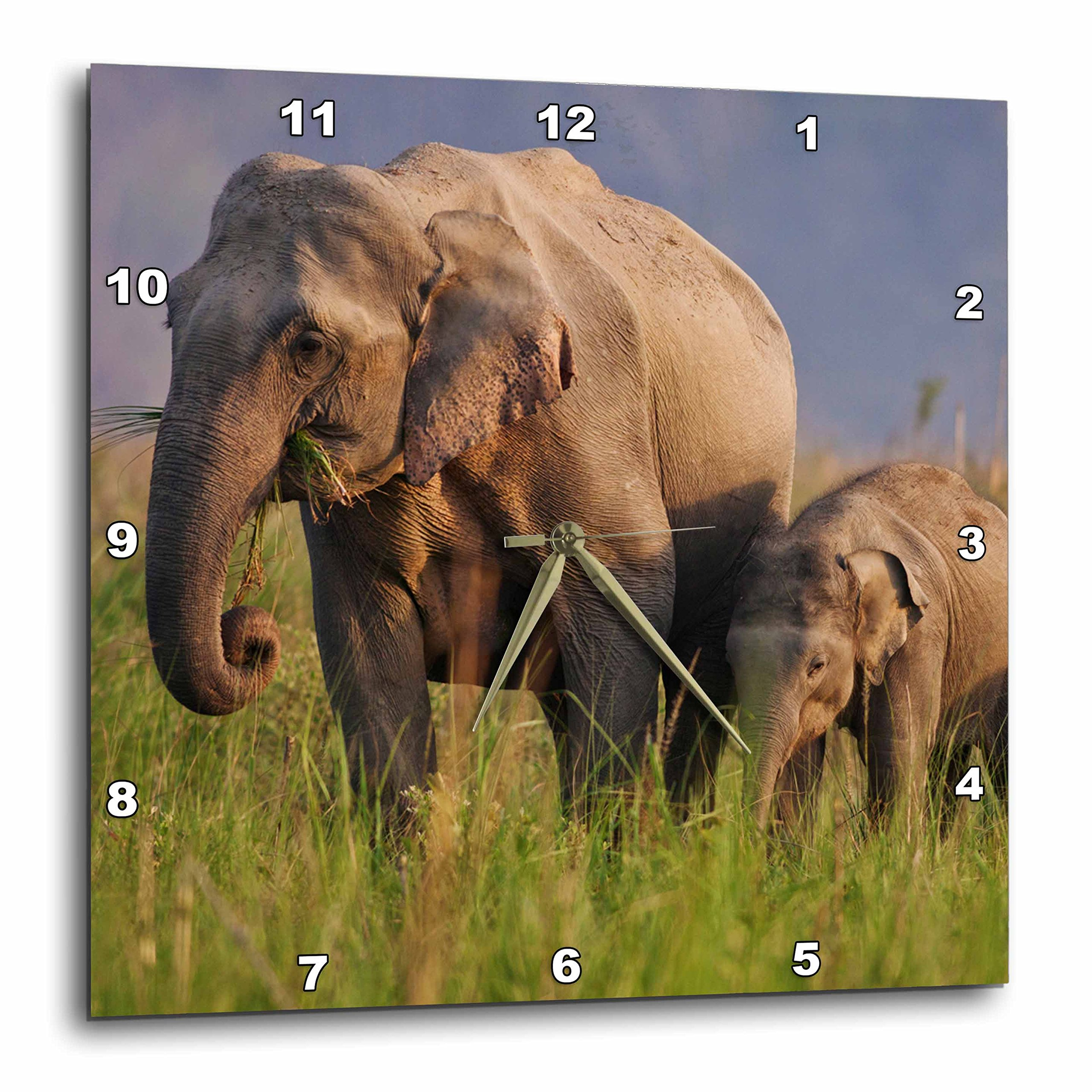 3dRose Indian Asian Elephant, Mother and calves, Corbett Np, India. - Wall Clock, 13 by 13'' (dpp_208560_2)