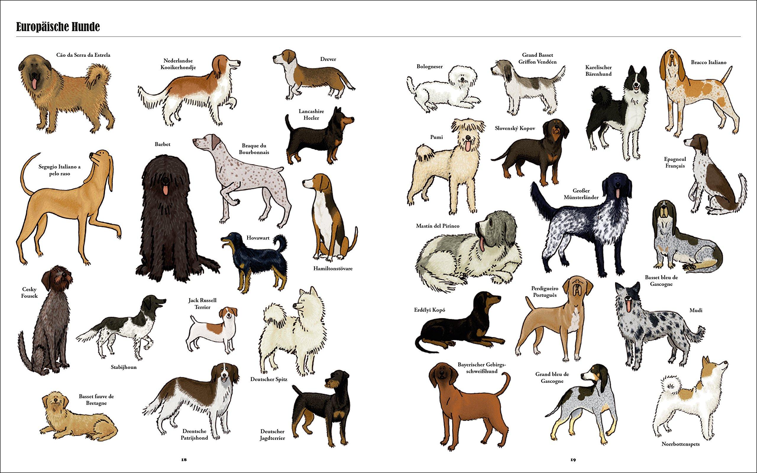 Alle Kleine Hunderassen