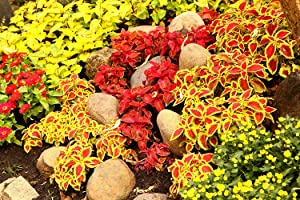 Easy Garden Roll Out Flowers Shady Garden Gardening kit - SG1000 10-Foot by 10-Inch - by Garden Innovations