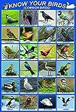 Connaissez vos Oiseaux | laminé Britannique Angleterre Grande-Bretagne Native Oiseaux | | Wildlife POSTER éducatif Tableau mural