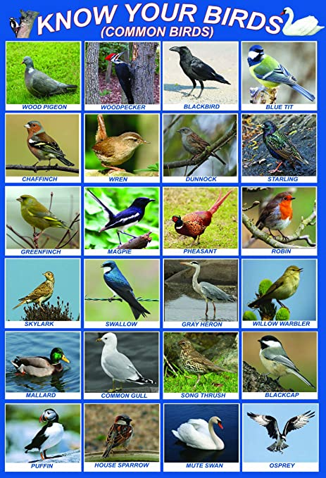 Laminated Know Your Birds British Uk England Great Britain Native