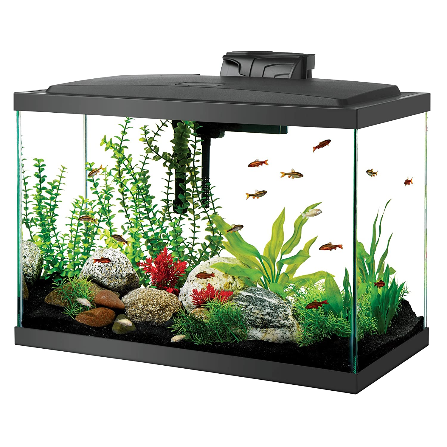 Top 7 best 20 gallon aquariums in 2018 market list for 20 gallon fish tank kit