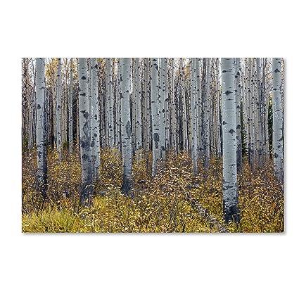 Amazon.com: Trademark Fine Art Aspen Trees in Autumn by Pierre ...