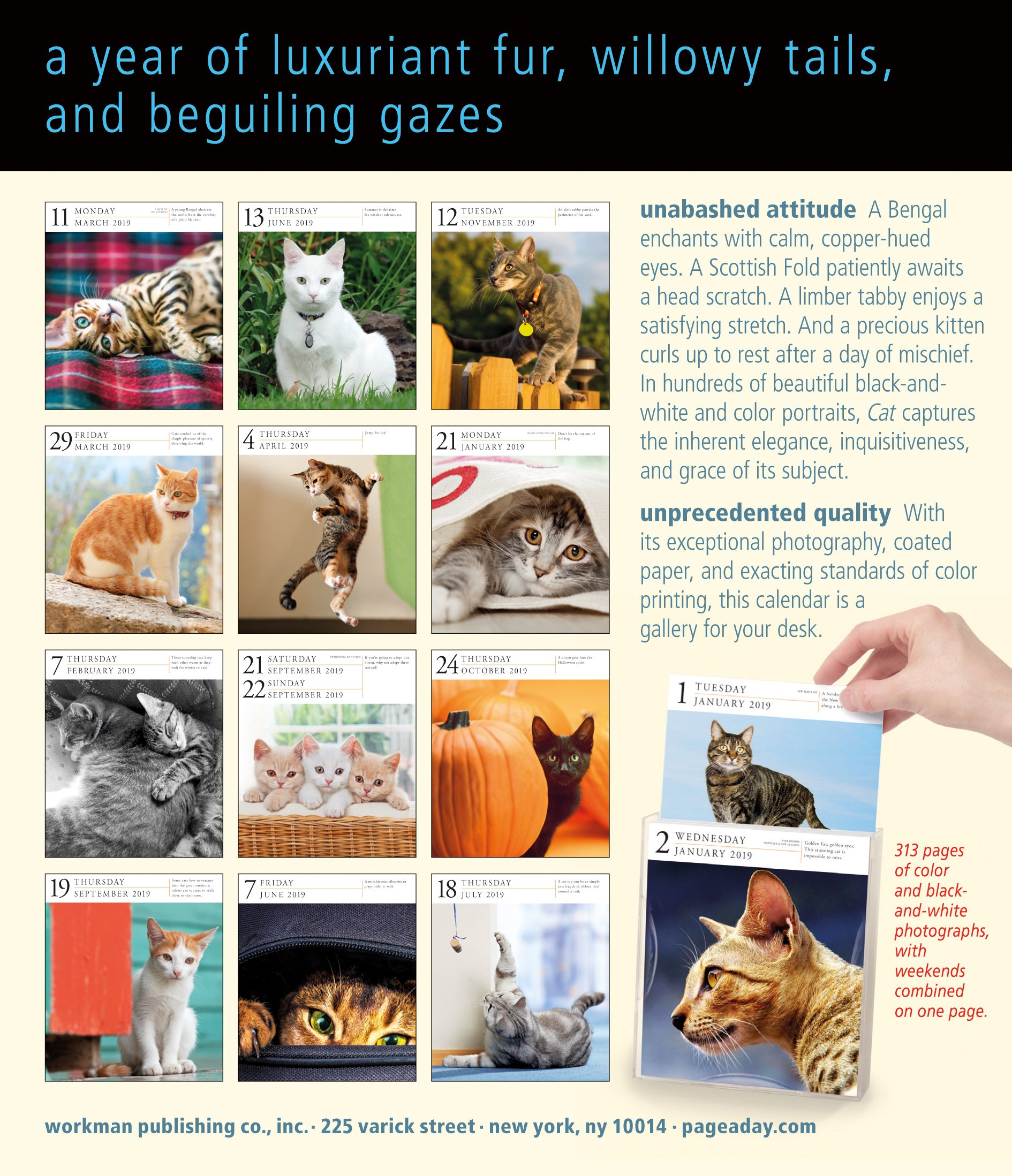 Cat Page-A-Day Gallery Desk Calendar 2019 [6.25'' x 7.25'' Inches] by 2019 Calendars (Image #2)
