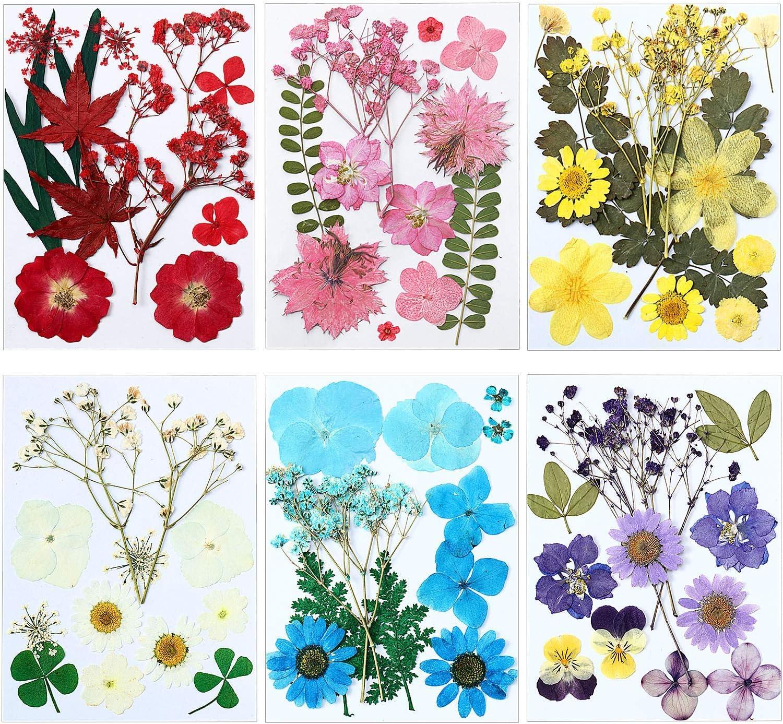 72 Piezas De Flores Secas Reales Prensadas Y Secas Conjunto De Hojas Mezcladas Con Múltiples Flores Secas Para Hacer Velas Y Joyas De Resina Para Decoración De Uñas Arte Manualidades Y