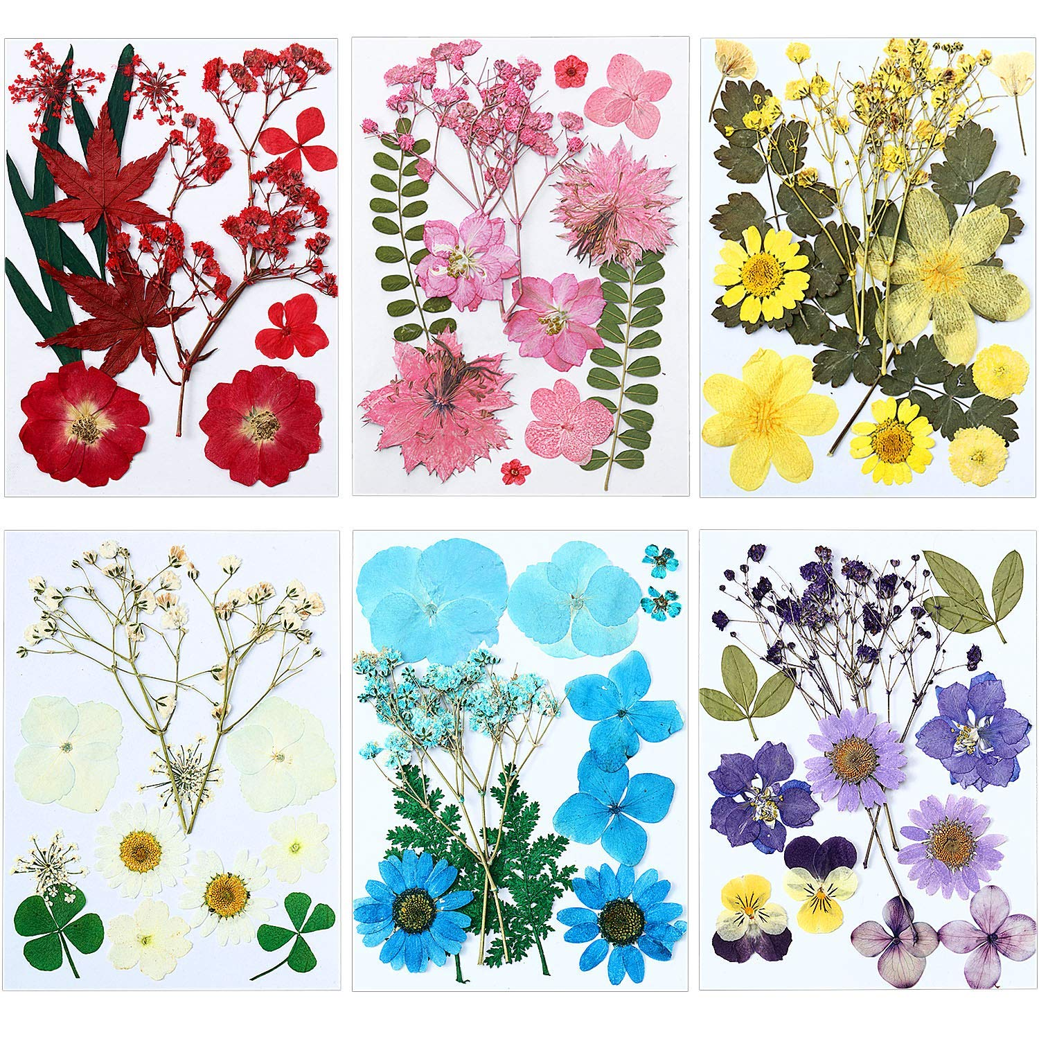72 Pieces Real Dried Pressed Flowers Dried Flowers Leaves Set Mixed Multiple Dry Flower for DIY Candle Resin Jewelry Nail Pendant Crafts Art Floral Decoration