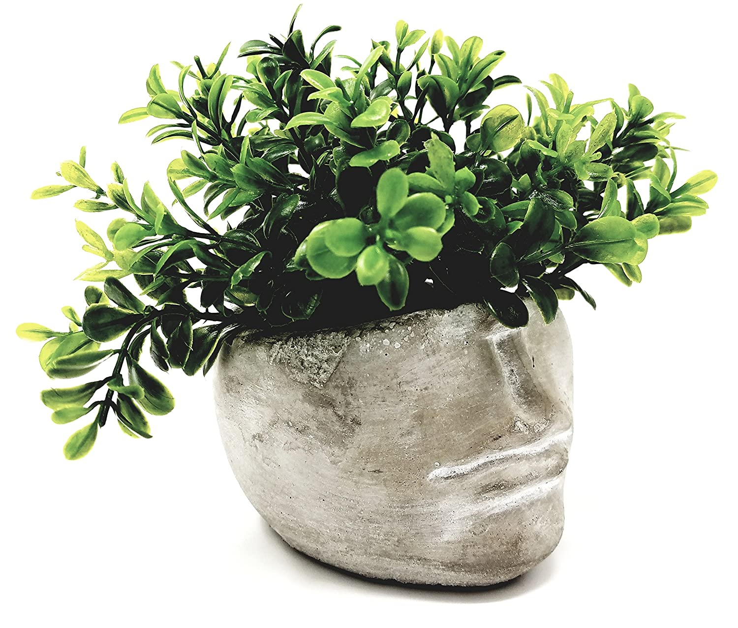 Succulent Planter 4 Inch Modern Cement Indoor Outdoor Planter Face Pot for Home or Office Great for Succulents, Cactus, Aloe, Moss, Ferns and More 1