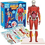 """Be Amazing! Toys Interactive Human Body Fully Poseable Anatomy Figure – 14"""" Tall Human Body Model for Kids - Anatomy Kit – Re"""