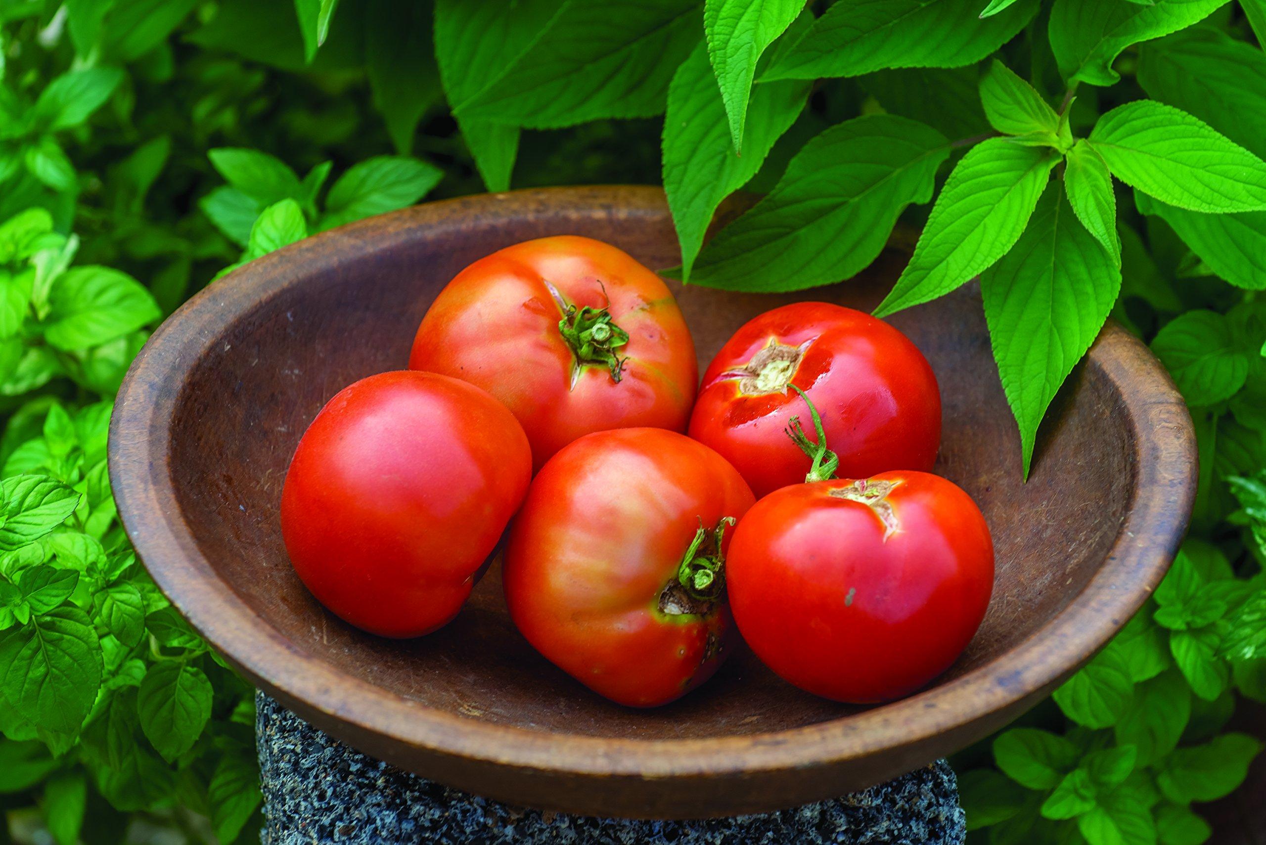 Burpee's 'Big Boy' Tomato Plants, 3 plants