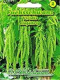 Fuchsschwanz Viridis Amaranthus caudatus