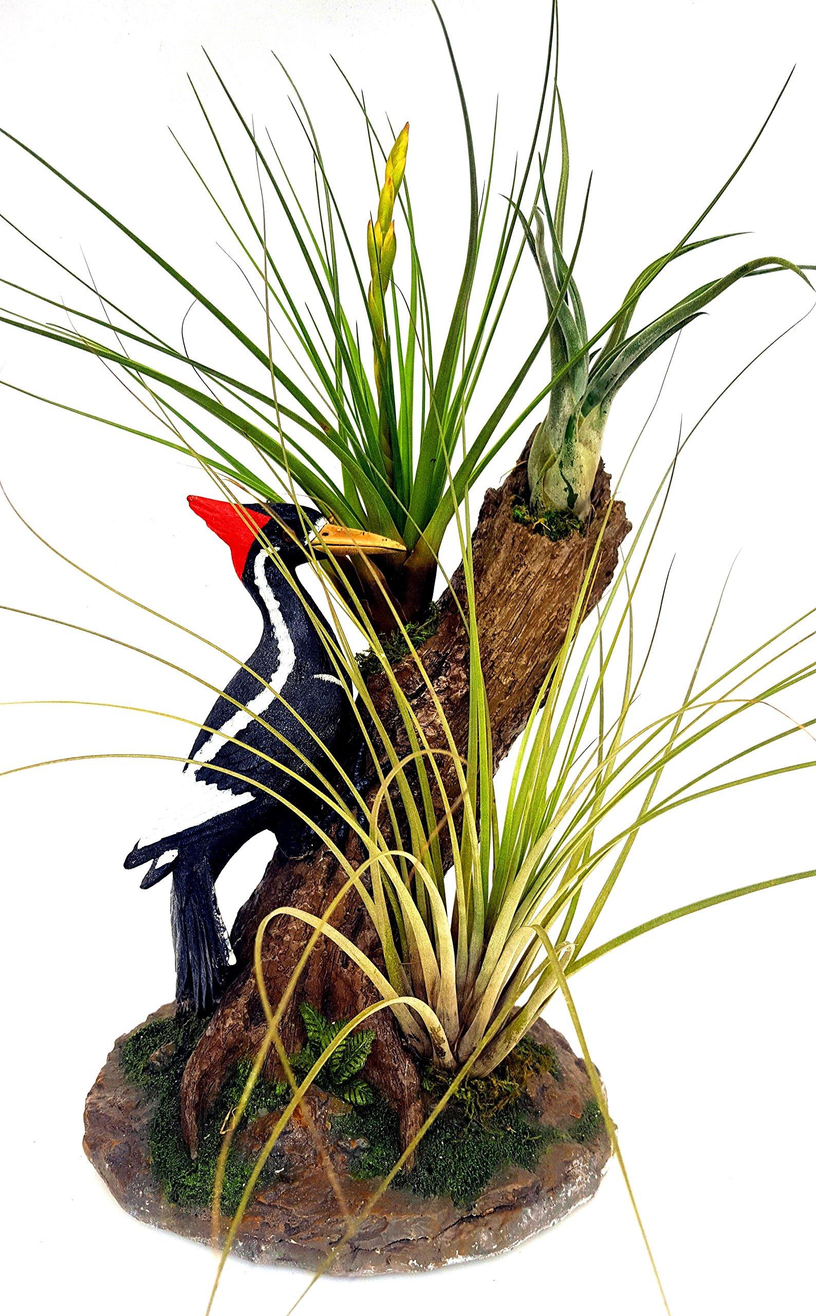 Air Flora 20'' Plant Woodpecker, Small, Mix Colors