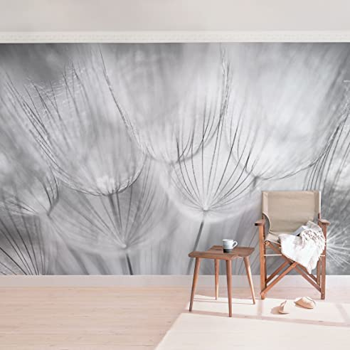 Vliestapete Premium   Pusteblumen Makroaufnahme In Schwarz Weiss    Fototapete Breit Vlies Tapete Wandtapete Wandbild Wohnzimmer